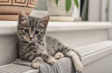 10 Necessary Items you should have When adopting a Cat
